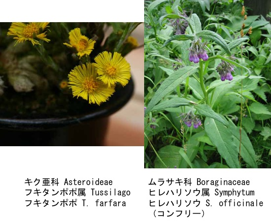 f:id:yachikusakusaki:20170320004727j:plain