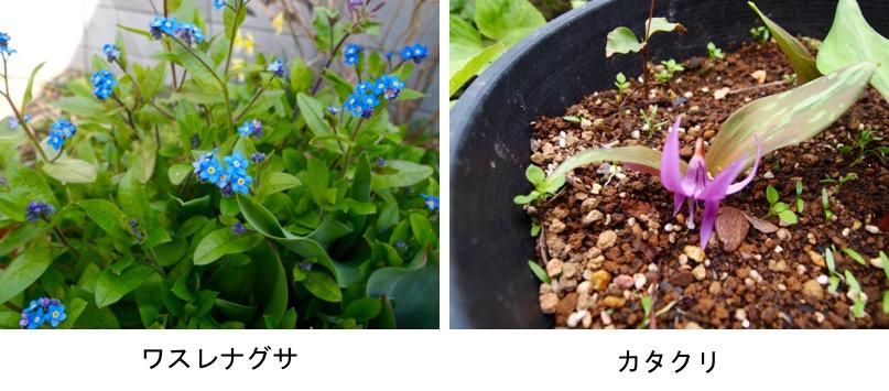 f:id:yachikusakusaki:20170325000245j:plain