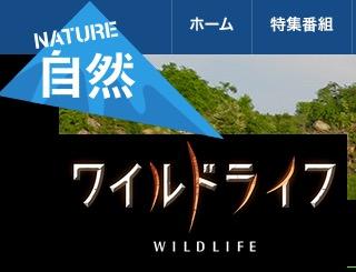 f:id:yachikusakusaki:20170328211023j:plain
