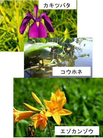 f:id:yachikusakusaki:20170328214013j:plain
