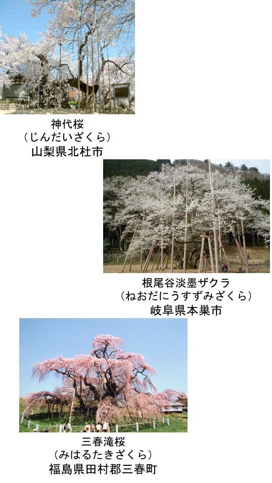 f:id:yachikusakusaki:20170329095335j:plain