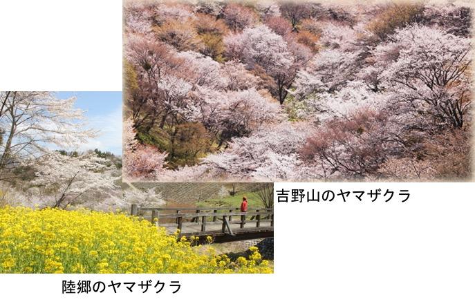 f:id:yachikusakusaki:20170329095425j:plain