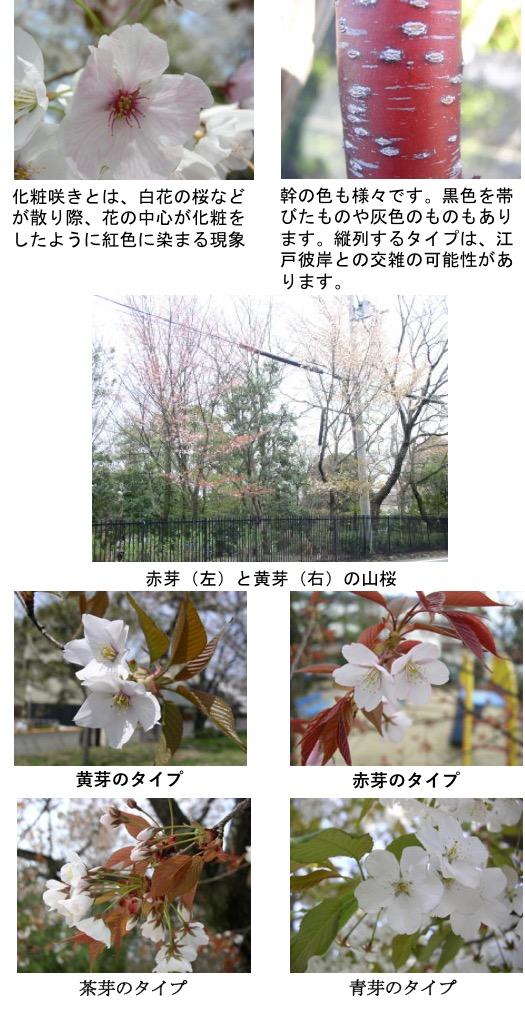 f:id:yachikusakusaki:20170329095443j:plain
