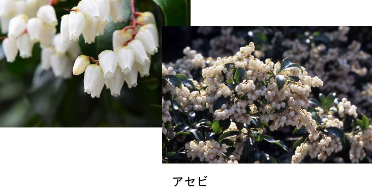 f:id:yachikusakusaki:20170329231938j:plain