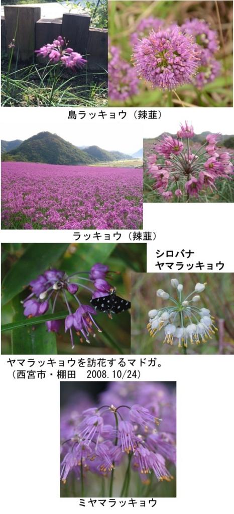 f:id:yachikusakusaki:20170401022731j:plain