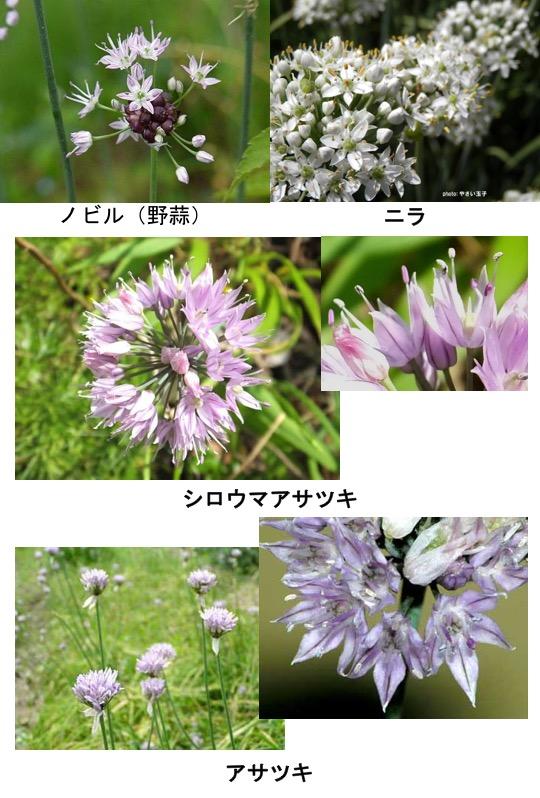 f:id:yachikusakusaki:20170401022829j:plain