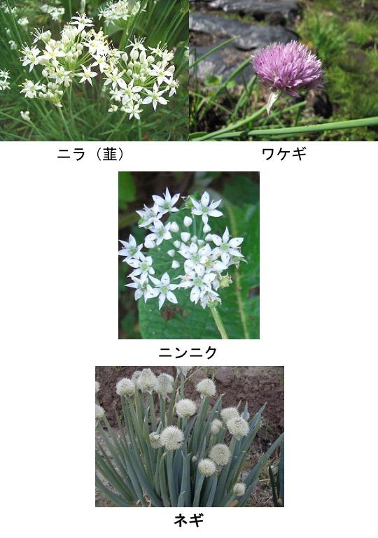 f:id:yachikusakusaki:20170401023019j:plain
