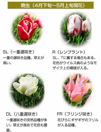 f:id:yachikusakusaki:20170406002612j:plain