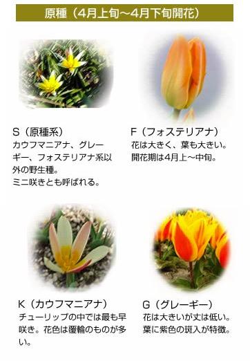 f:id:yachikusakusaki:20170406002733j:plain