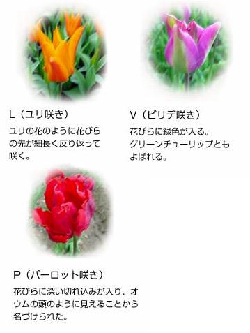f:id:yachikusakusaki:20170406013043j:plain