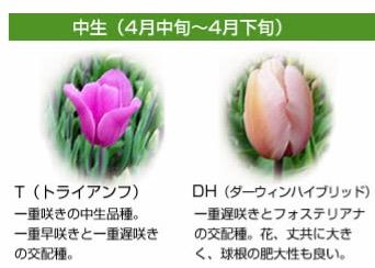 f:id:yachikusakusaki:20170406013149j:plain