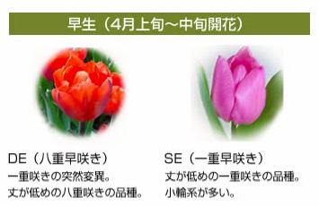 f:id:yachikusakusaki:20170406013229j:plain