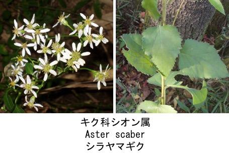 f:id:yachikusakusaki:20170409004538j:plain