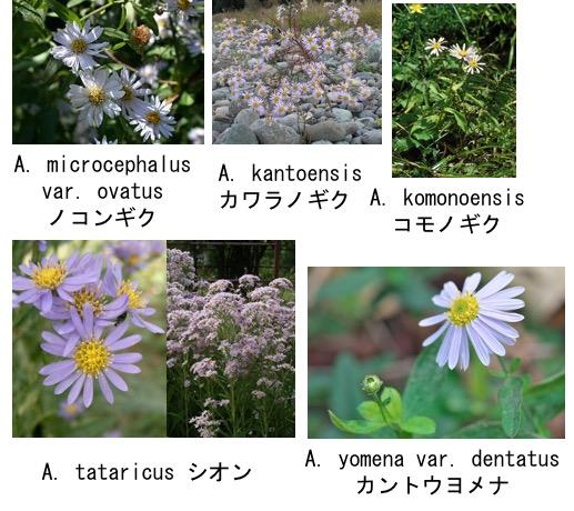 f:id:yachikusakusaki:20170409124303j:plain