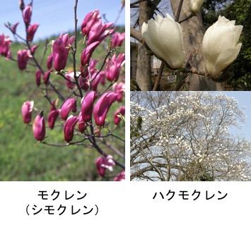 f:id:yachikusakusaki:20170412213318j:plain