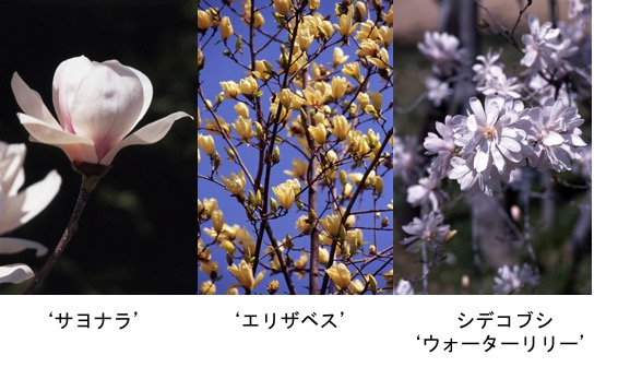 f:id:yachikusakusaki:20170412220736j:plain