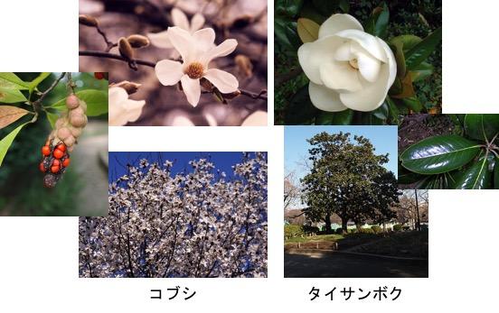 f:id:yachikusakusaki:20170412221144j:plain