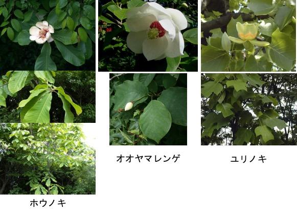 f:id:yachikusakusaki:20170412222959j:plain