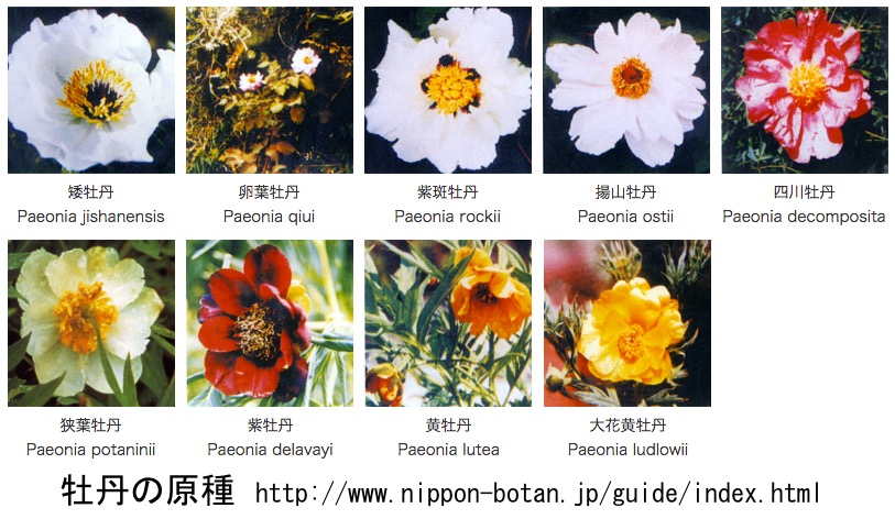 f:id:yachikusakusaki:20170420013509j:plain