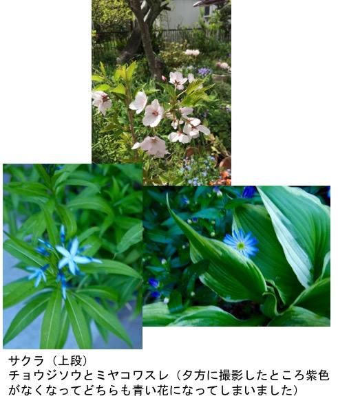f:id:yachikusakusaki:20170420023619j:plain