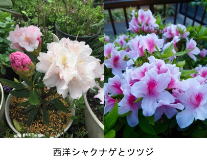 f:id:yachikusakusaki:20170420023634j:plain