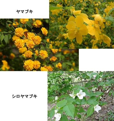 f:id:yachikusakusaki:20170422225032j:plain