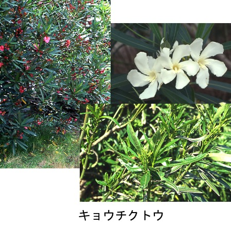 f:id:yachikusakusaki:20170424221240j:plain