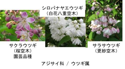 f:id:yachikusakusaki:20170427004908j:plain