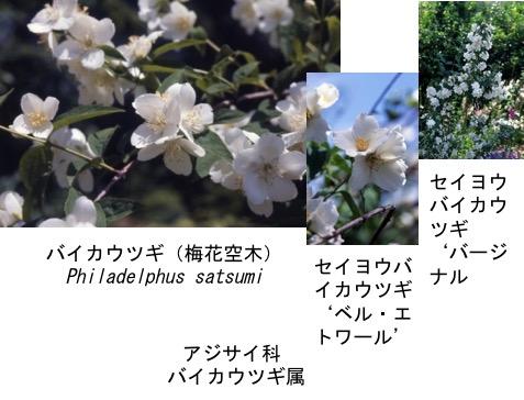 f:id:yachikusakusaki:20170427010105j:plain