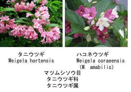 f:id:yachikusakusaki:20170427010350j:plain