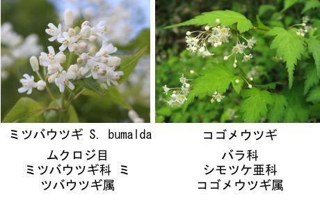 f:id:yachikusakusaki:20170427011425j:plain