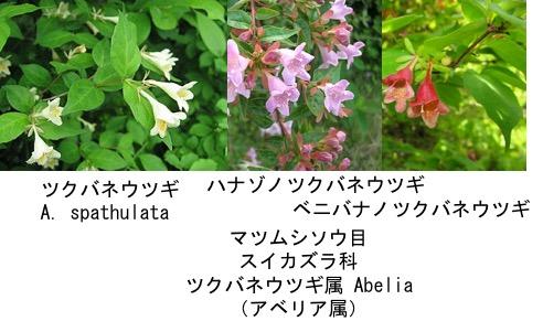 f:id:yachikusakusaki:20170427011804j:plain