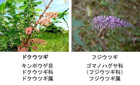 f:id:yachikusakusaki:20170427032730j:plain