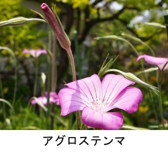 f:id:yachikusakusaki:20170501205508j:plain
