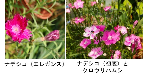 f:id:yachikusakusaki:20170501211426j:plain