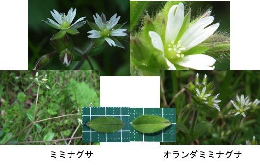 f:id:yachikusakusaki:20170501220941j:plain