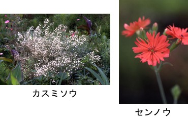 f:id:yachikusakusaki:20170501223314j:plain