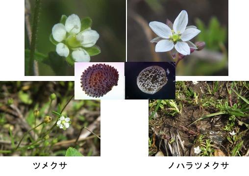 f:id:yachikusakusaki:20170501225422j:plain