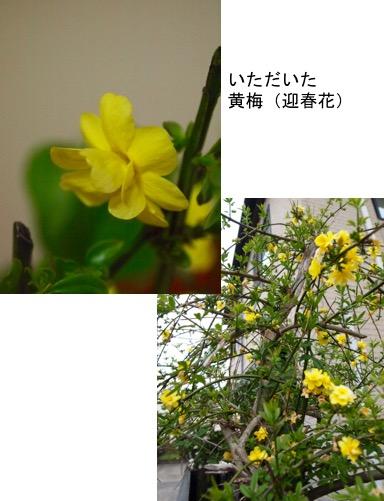 f:id:yachikusakusaki:20170502004128j:plain
