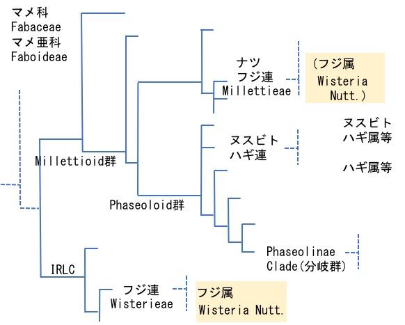 f:id:yachikusakusaki:20170505015930j:plain