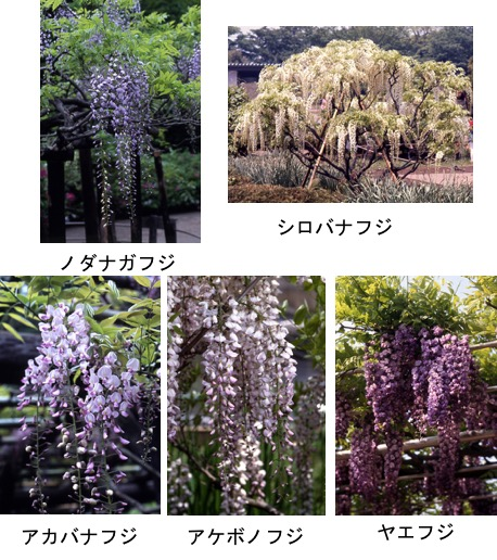 f:id:yachikusakusaki:20170505021456j:plain