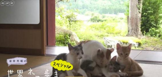 f:id:yachikusakusaki:20170507004525j:plain