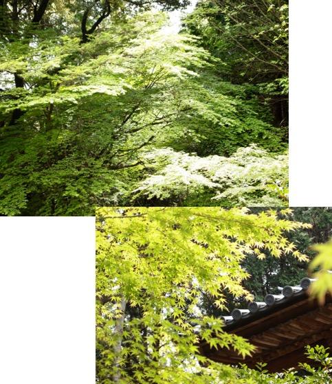 f:id:yachikusakusaki:20170508215620j:plain