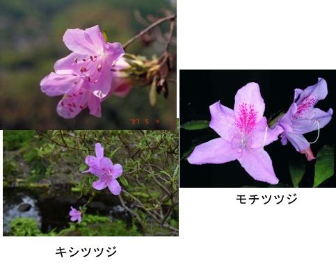 f:id:yachikusakusaki:20170508224952j:plain