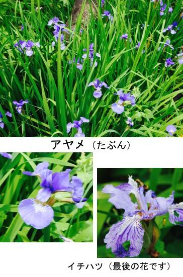 f:id:yachikusakusaki:20170516181435j:plain