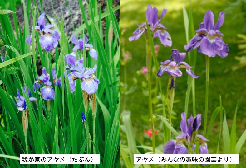 f:id:yachikusakusaki:20170516182839j:plain