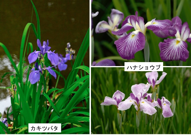 f:id:yachikusakusaki:20170516184103j:plain