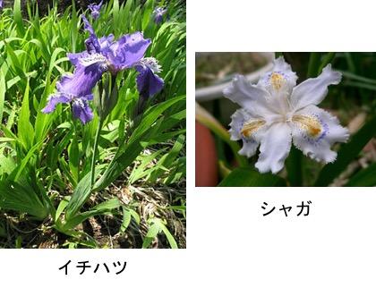 f:id:yachikusakusaki:20170516184604j:plain