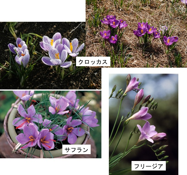 f:id:yachikusakusaki:20170516185416j:plain
