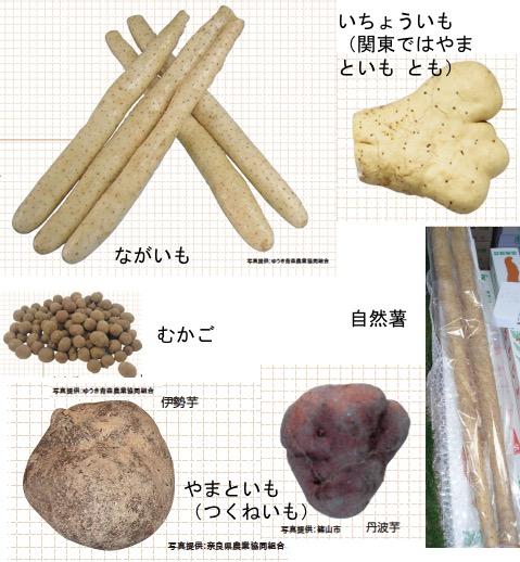f:id:yachikusakusaki:20170519020304j:plain